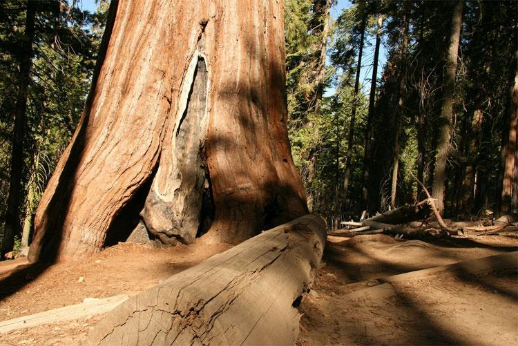 Redwood State Park, Kalifornien, USA