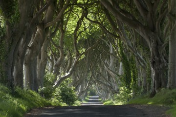 Dark Hedges, Nordirland © Tou­rism Ire­land