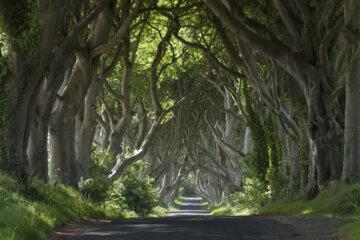 Dark Hedges, Nordirland © Tourism Ireland