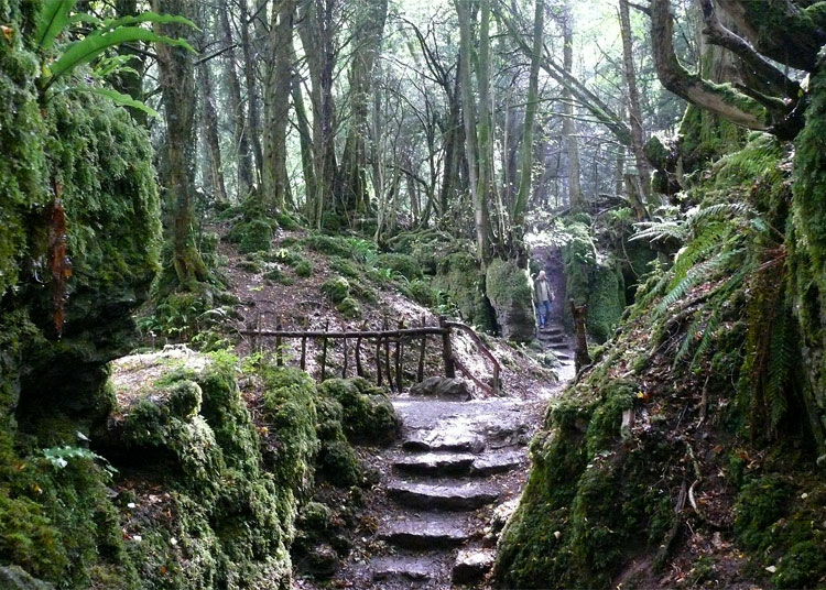 Puzzlewood, Forest Dean, England
