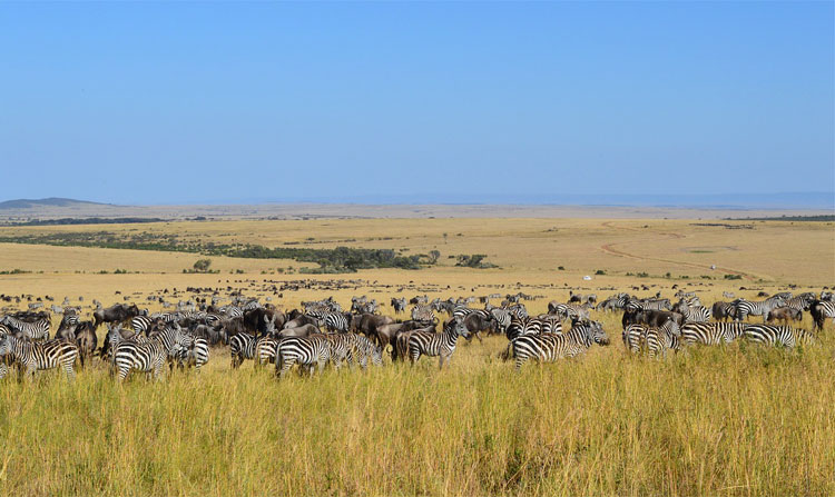 Masai Mara, Serengeti, Kenia