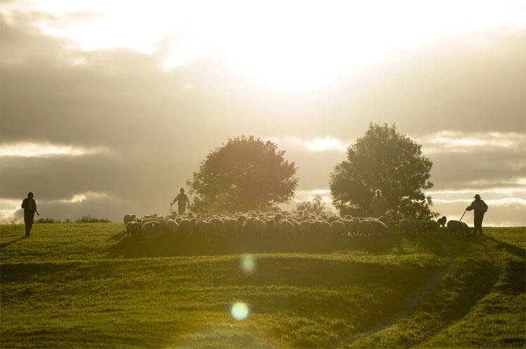 Dorset, England © 2015 Twentieth Century Fox