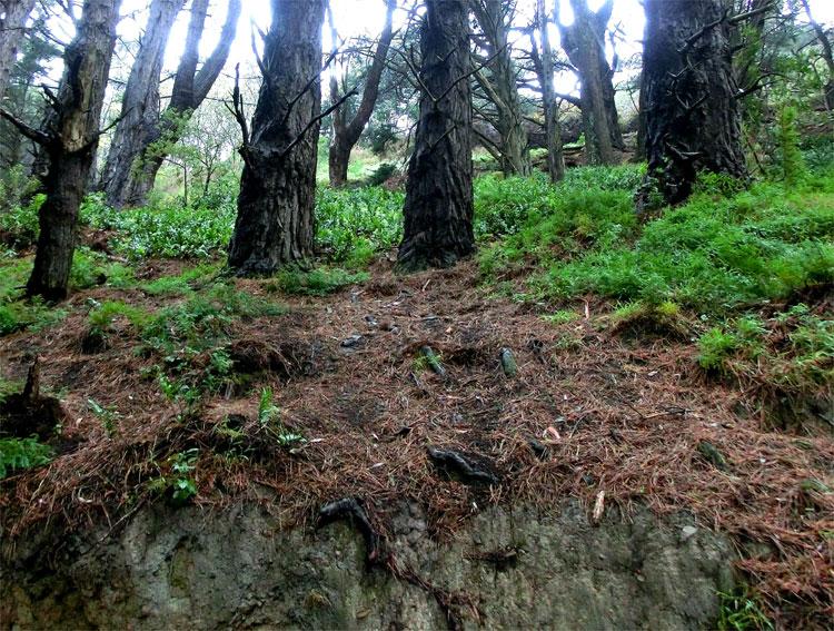 """""""Mittelerde""""-Wald, Wellington, Neuseeland © Corinna Laimer"""