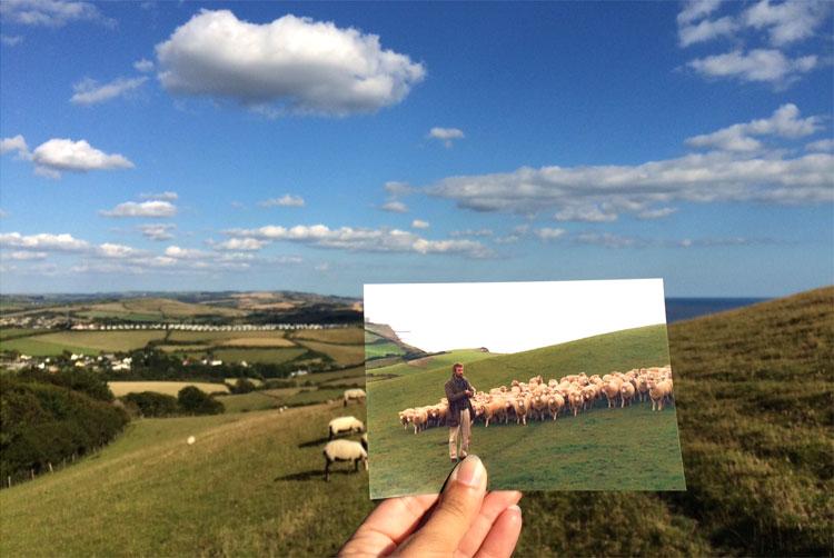 """Schafsweide aus """"Am grünen Rand der Welt"""" in Higher Eype, England © Andrea David"""