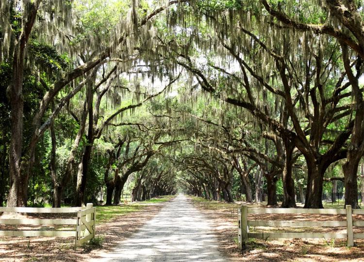 """Drehort aus """"Mit dir an meiner Seite"""", Wormsloe Plantation, Savannah, Georgia © Mandy Decker / Travelroads"""