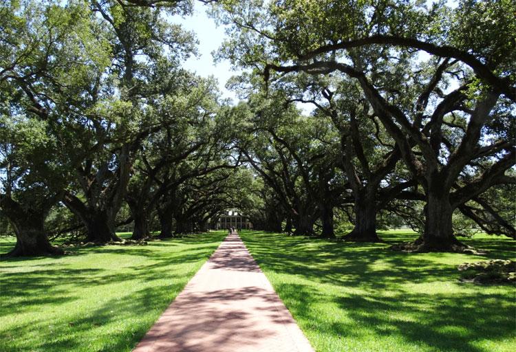 Oak Alley Plantation, Louisiana © Mandy Decker / Travelroads