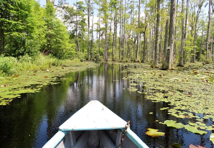 """Drehort aus """"Wie ein einziger Tag"""", Cypress Gardens, South Carolina © Mandy Decker / Travelroads"""