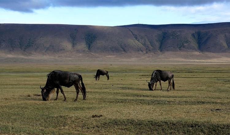 Ngorongoro-Krater, Tansania