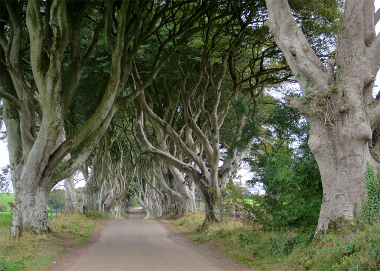Dark Hedges, Nordirland © Andrea David