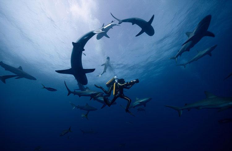 "Filmszene aus ""Jacques - Entdecker der Ozeane""© Wild Bunch"