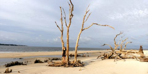 """The Walking Dead""-Drehort Driftwood Beach, Jekyll Island, Georgia"