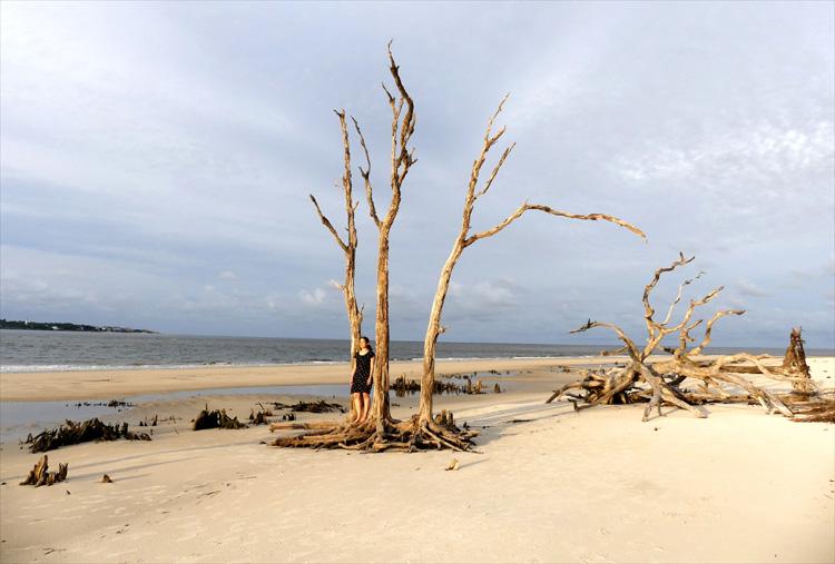 """The Walking Dead""-Drehort Driftwood Beach, Jekyll Island, Georgia"