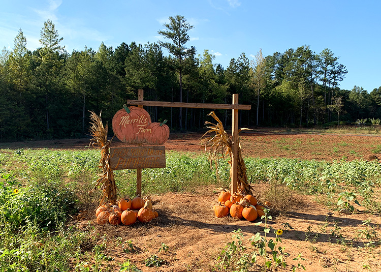 Merill's Pumpkin Patch, Powder Springs, Georgia